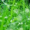 Đèn ngọn cỏ / Victor Vetterlein