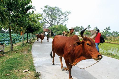 Cổng chính vào làng - Có nên bê tông hóa?