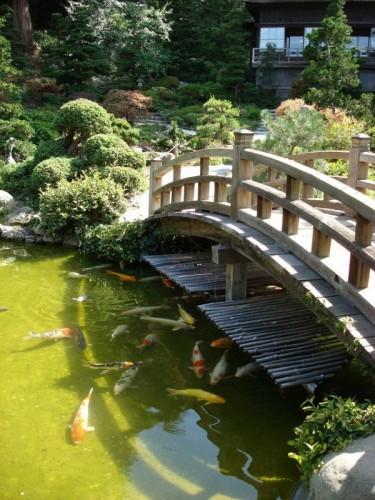 large-koi-pond-with-bridge-14-600x800