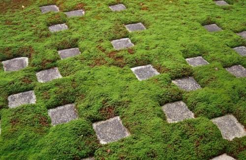 Rêu được trải rộng ra khắp không gian khu vườn