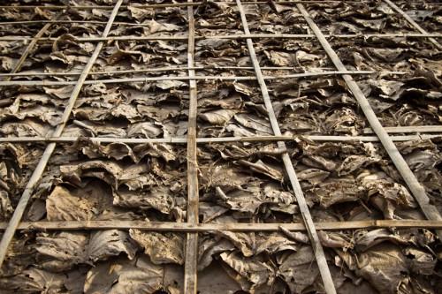 các ván sàn mái nhà được làm từ lá bạch đàn và mạng tinh thể được làm bằng những dải nhỏ bằng tre không được điều trị
