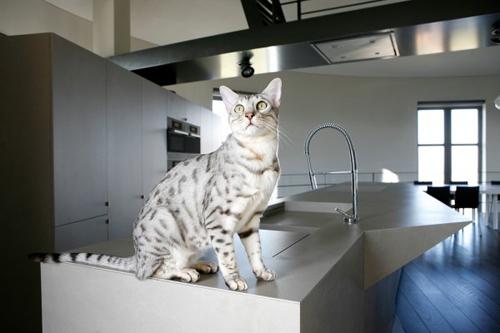 Chú mèo cưng cũng rất yêu thích không gian sống có một không hai này.