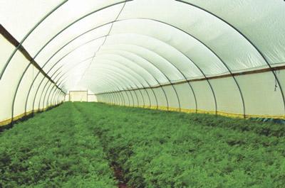 Tấm lợp cao cấp sử dụng kết cấu maisnhaf kính nông nghiệp