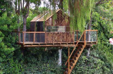 """Các tiêu chí để xây dựng """"nhà trên cây"""" - Tree House"""