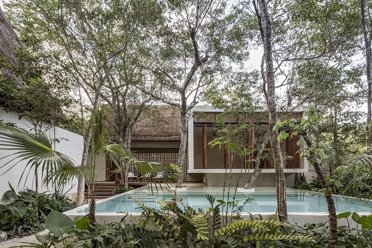 Jungle Keva