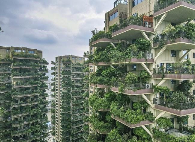 """Chung cư """"Khu rừng thẳng đứng"""" bị bỏ hoang vì quá nhiều muỗi tại Tứ Xuyên, Trung Quốc"""