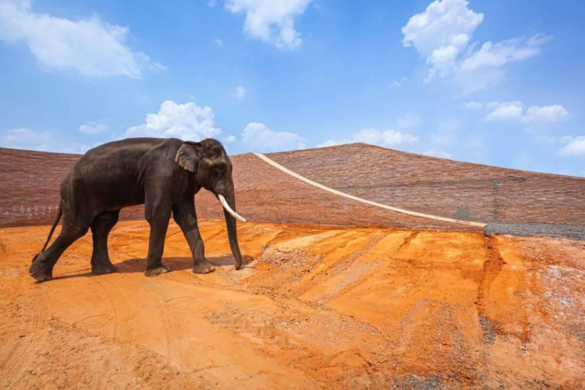 Bảo tàng voi ở Thái Lan, sự hòa hợp giữa con người và động vật   Bangkok Project Studio